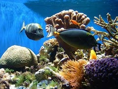 More than 500 diving places to enjoy in Cuba